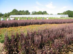 General Specialty Organic Seed Production Resources - eXtension