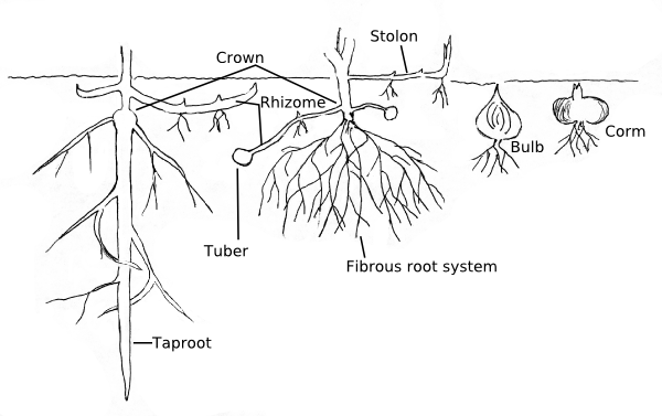 Roots and other underground structures