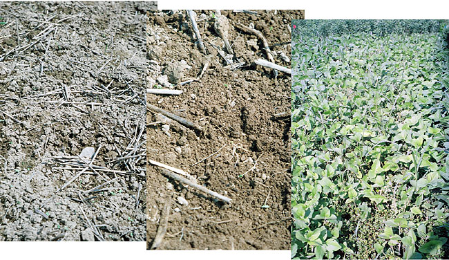 Prepare seedbeds immediately before drilling