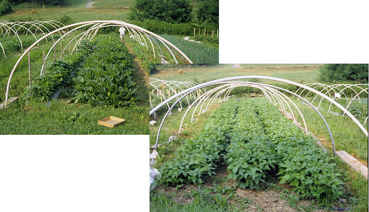Beans and squash started under row covers on hoops