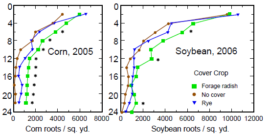 Figure 3 Graph showing enhanced corn and soybean rooting density after radish cover crop