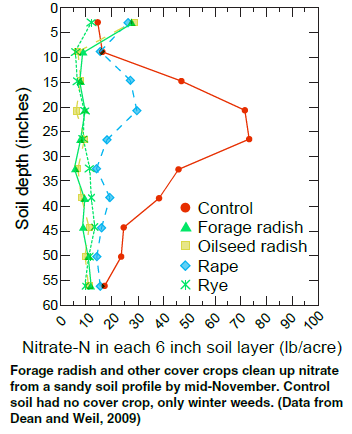Figure 6 Scavenging of soil nitrate by radish