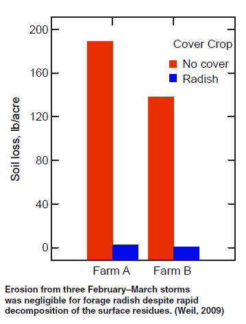 Figure 8 Impact of radish on soil loss