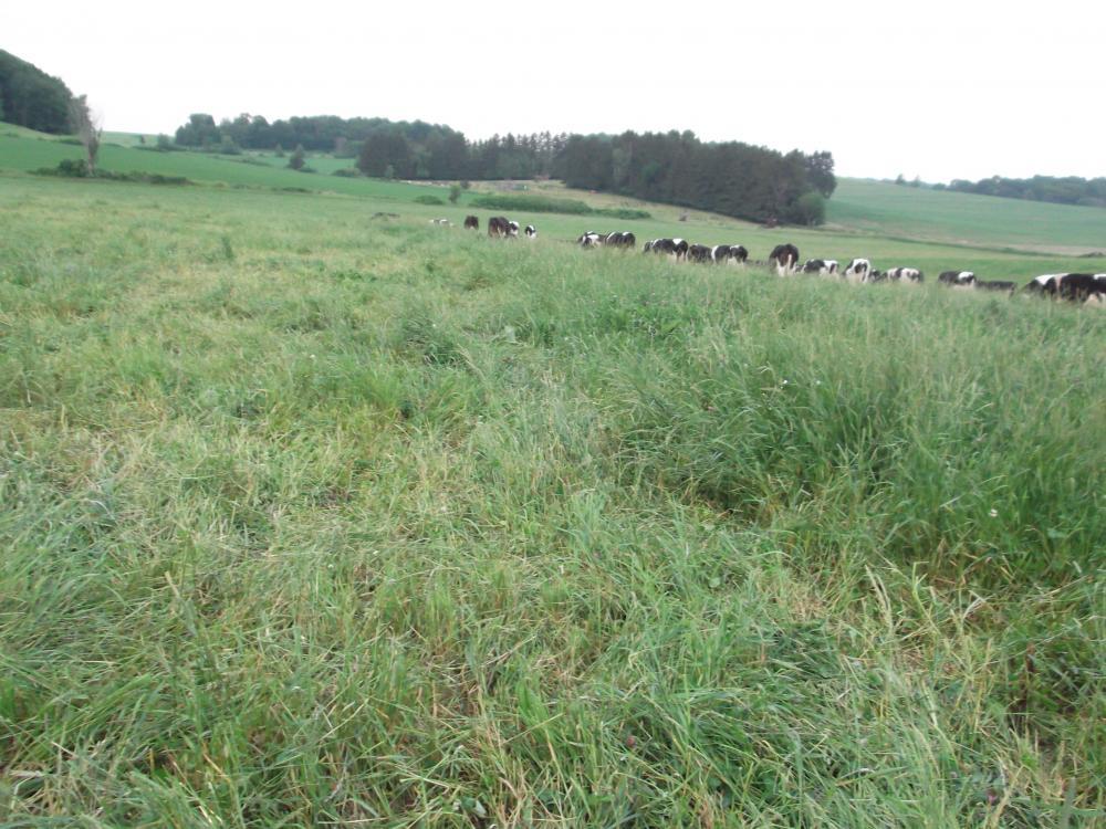 Grazing Acres Farm: Organic Dairy Case Study - eXtension
