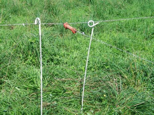 Example of temporary fence: pigtail posts and reeled polywire (photo by Debra Heleba)