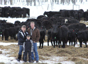 family with cattle herd