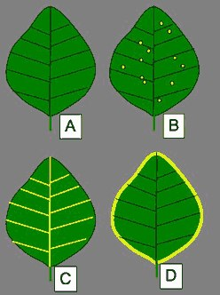 leaf disease patterns