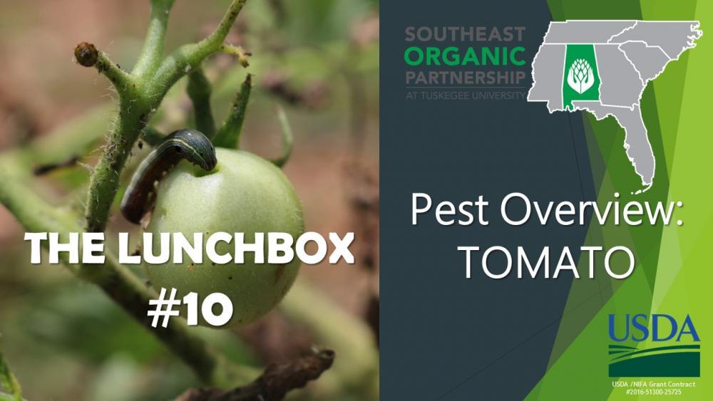 Lunchbox #10