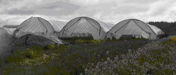 Three high tunnels at Gathering Together Farm, Philomath, Oregon. Photo credit: Galen Weston, Tuolumne River Trust