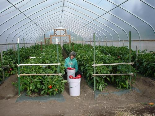 Introduction to season extension in organic vegetable - Increase greenhouse production cost free trick ...
