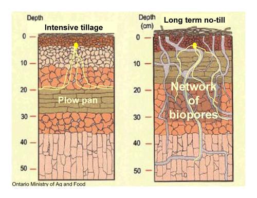 intensive-till versus no-till soil structure