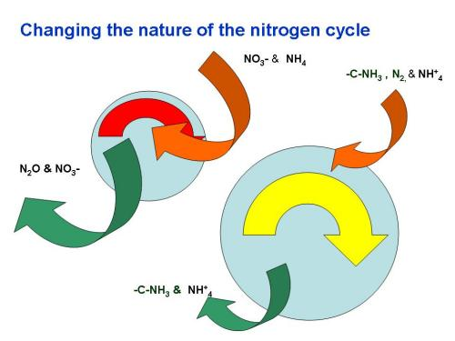 The figures above depict changes in N cycling in systems where N is supplied in inorganic fertilizers to systems that rely on organic sources. The size of the blue sphere represents the active or labile fraction of soil organic matter and the thickness and coloration of the arrows reflect the size and cycling rates of nutrient reserves. Red arrows identify pools that cycle more rapidly than yellow.