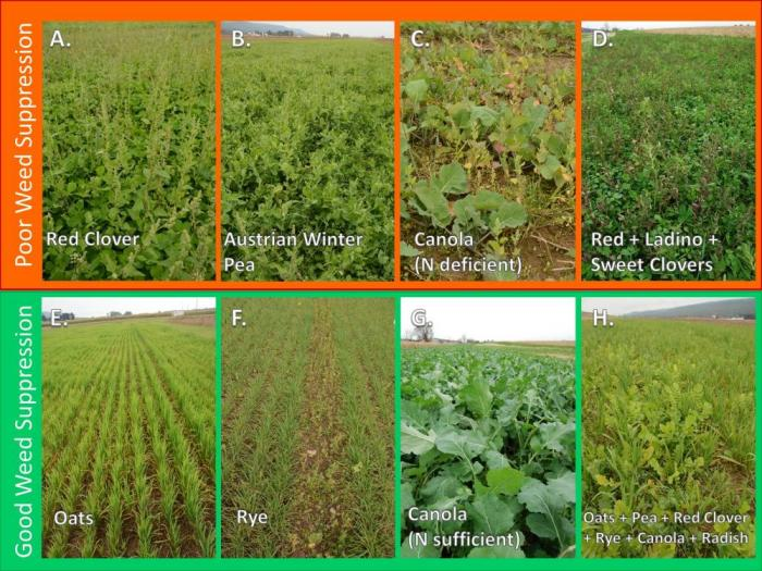Making The Most Of Mixtures Considerations For Winter Cover Crops