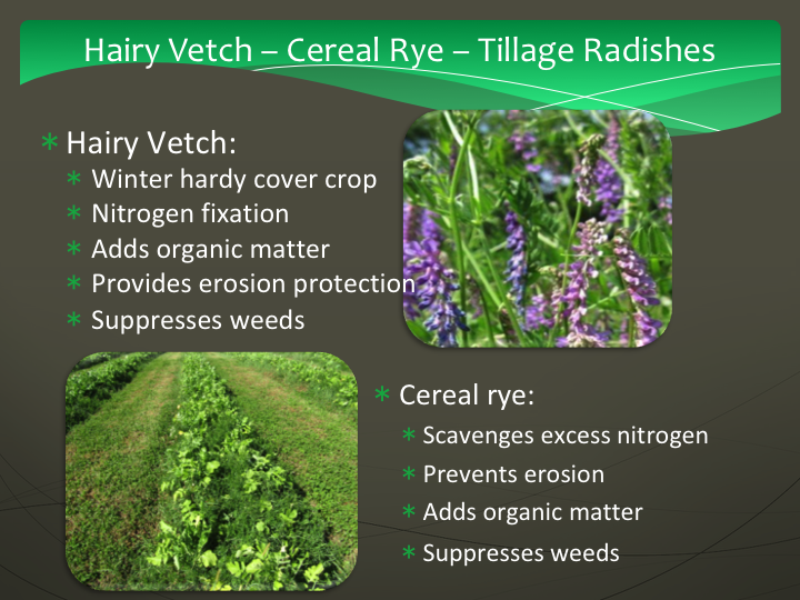 Hairy vetch, cerial rye, tillage radish