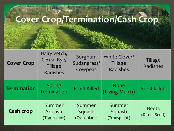 Cover Crops, Termination Methods and Cash Crops