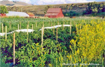 Biodesign farm