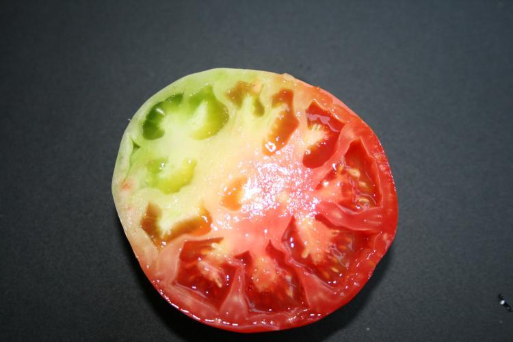 Resultado de la imagen para Blotchy maduring tomato